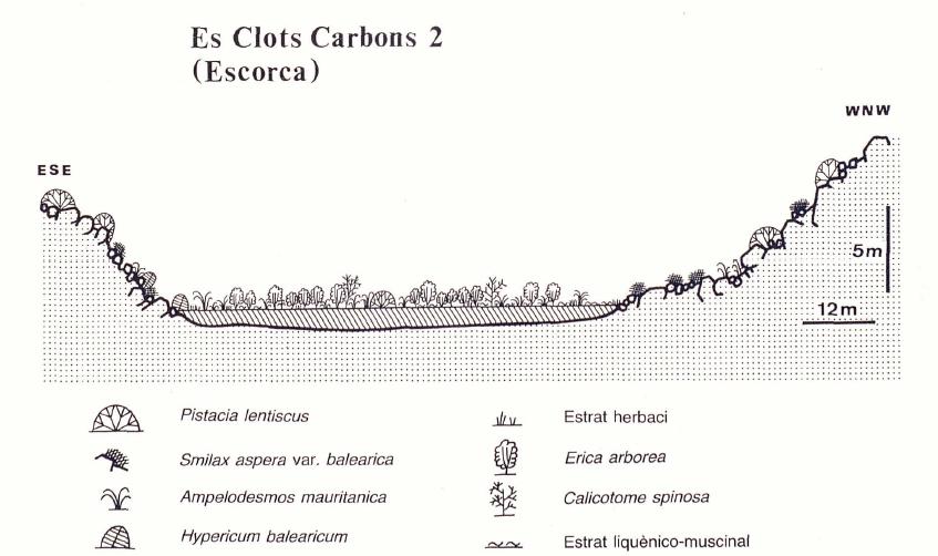 Clots Carbons