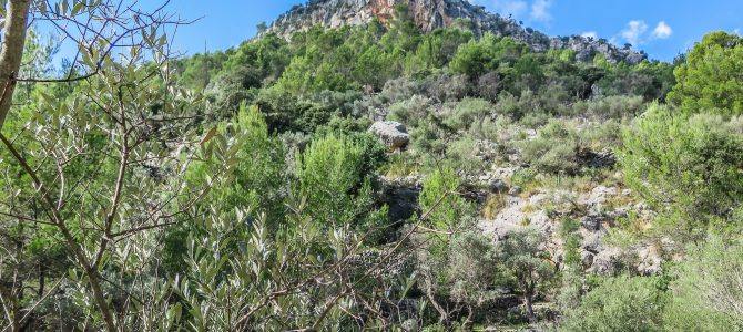 Talaia de Cal Reis por el Pas de s'Escaleta
