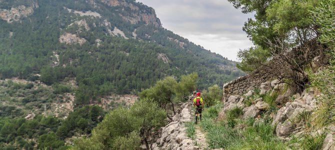 Camí dels Alous i Camí de Son Barranco