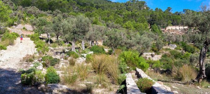 Coll d'Estellencs por el Camí de Es Grau y Camí vell d'Estellencs